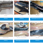Žuvies parduotuvė